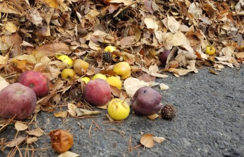 Sustaining roads with grape and agricultural waste