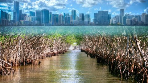 mangrove-forests-protect-coastlines-'synthetic-mangroves'-could-do-the-same-for-cities.