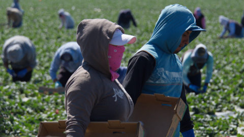 farmworkers-are-risking-their-lives-to-feed-a-nation-on-lockdown