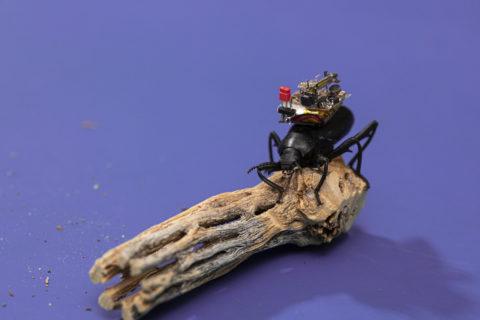 a-bug-sized-camera-for-bug-sized-robots-and-bug-sized-bugs