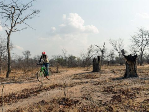 zimbabwe-hopes-rural-electrification-can-stop-deforestation.-here's-why-it-might-not-work