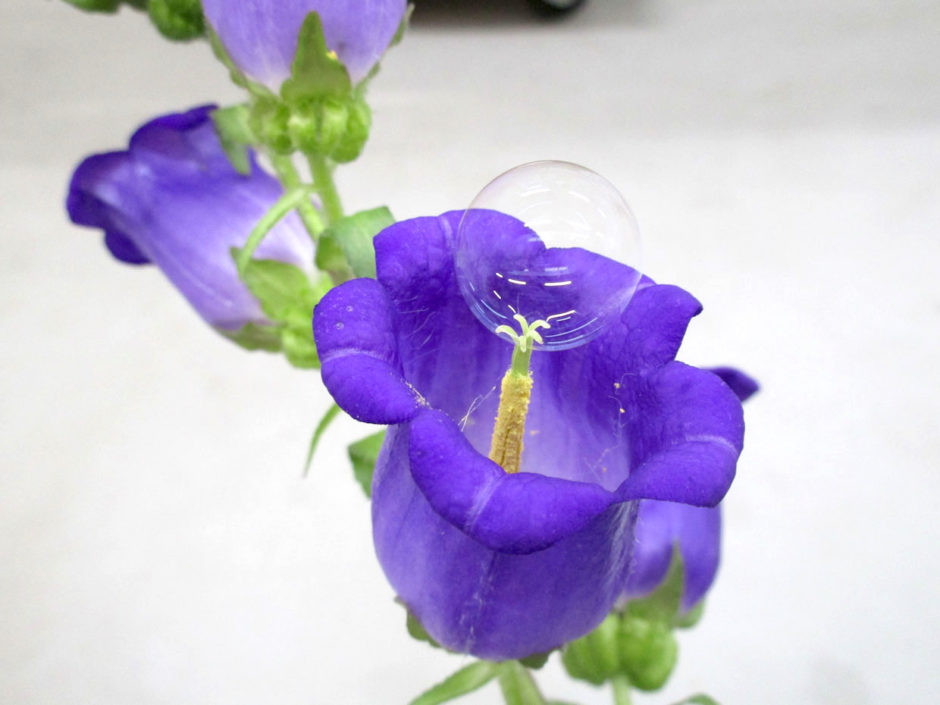 drone-with-bubble-machine-can-pollinate-flowers-like-a-bee