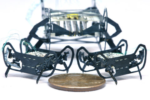 hamr-jr-is-a-speedy-quadrupedal-robot-the-size-of-a-penny