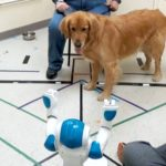 dogs-obey-commands-given-by-social-robots