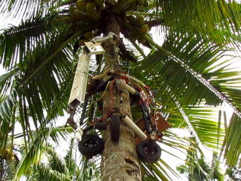 amaran-the-tree-climbing-robot-can-safely-harvest-coconuts