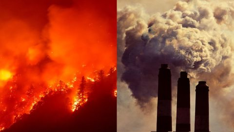 this-oregon-forest-was-supposed-to-store-carbon-for-100-years-now-it's-on-fire.