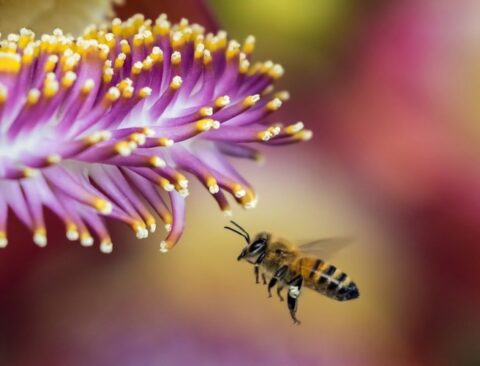 honeybees-can-solve-maths-tests-without-using-numbers