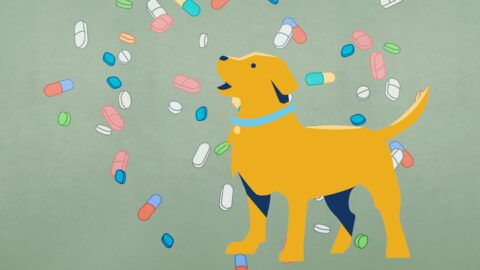 are-nutritional-supplements-the-best-choice-for-people,-their-pets,-and-the-planet?