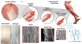 freezing-and-salting-produce-tougher,-stronger-hydrogels