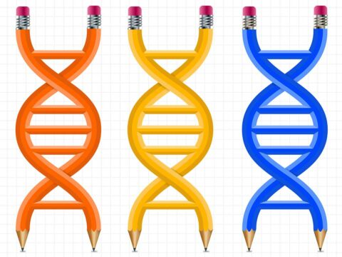 with-this-cad-for-genomes,-you-can-design-new-organisms