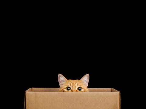amazon's-new-quantum-computer-design-relies-on-tiny-schrodinger's-cats