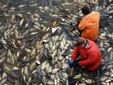 the-fabulous-growth-in-aquaculture