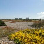 dungeness-b-enters-defuelling-phase-with-immediate-effect