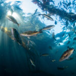 consumers-are-demanding-more-sustainable-seafood-—-and-it's-working