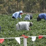 remote-sensing-used-to-tackle-modern-slavery-in-greece