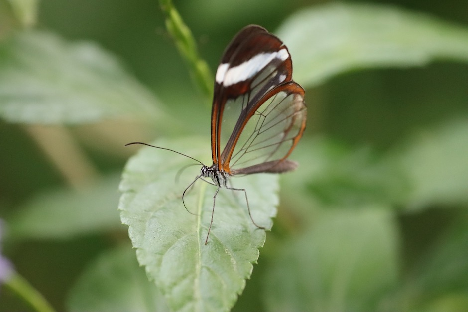 butterfly-wings-inspire-'invisible'-solar-technologies